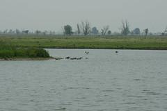 DSC06578 (Ton Smilde) Tags: oostvaardersplassen naturereserveinthenetherlands