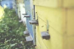 _ v (katemaad) Tags: green animal animals photo nikon bee 2014