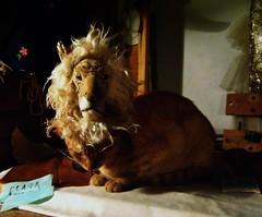 pequeño leON (Valeria Dalmon) Tags: red sculpture animal cat puppet lion leon gato dreams felino titere textil valeriadalmon