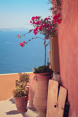 Santorini. (sarahbrust.) Tags: pink blue sea holiday flower blues santorini greece simple vacations oia