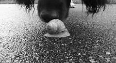 walk the dog II (joe.laut) Tags: bw dog blackwhite august rico sw schwarzweiss miniseries 2014 norby incoloro auntielu joelaut
