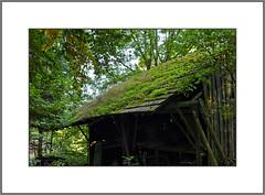 Dachgarten (Helmut Reichelt) Tags: leica germany deutschland bavaria oberbayern gras dach garten stadel m9 degerndorf colorefexpro4 leicasummaritm50mm captureone7 sonderham