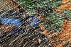 RISCOS DE GUA -  (68) (ALEXANDRE SAMPAIO) Tags: light luz gua brasil cores arte amor natureza paz vida contraste beleza fotografia formas desenhos franca cor fantstico aura desenho espao deus experimento criao energia iluminao geometria realidade universo irreal composio multiplicidade imaginao divino esttica delicadeza sensibilidade pontodevista manchas possibilidade experimentao invisvel possibilidades fragilidade visvel transcendncia irrealidade alexandresampaio riscosdegua