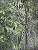 3213357093_ee5a10feef_o (gray.florie) Tags: allrightsreserved usewithoutpermissionisillegal ©2009florencetomasulogray florencegray floriegrayflorencetomasulograytomasulofloriegrayfloriegraycom