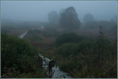 Weg durchs Moor (ustrassmann) Tags: nebel belgie moor belgien hohesvenn hautesfagnes holzsteg mtzenich
