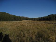 IMG_9106 (yellowstonehiker) Tags: meadows backpacking yellowstonenationalpark backcountry yellowstone backpackingtrip yellowstonemeadows yellowstonebackcountry wapitilakesourcreekaugust302014backpackingtrip sourcreekbushwhack