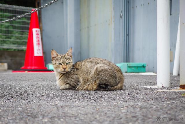 Today's Cat@2014-09-20