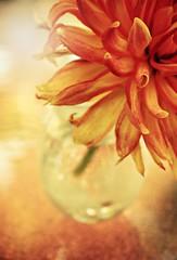 (Across & Down) Tags: orange flower gerbera daisy vase