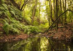 bosque del cedro (susodediego ) Tags: bosquedelcedro lagomera canaryislands olympusem10markii infinitexposure autofocus frameit thegalaxy contactgroups simplysuperb soe