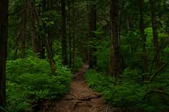 Incline (Kristian Francke) Tags: trail trees green dirt rough cedar brown pentax tamron spring bc canada british columbia golden ears provincial park