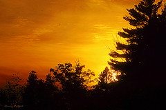Suns Twilight Silhouettes (rosearodoe) Tags: sunset silhouttes warm sunshine shadows clouds orange red skyline midwest manisteenationalforrest newaygocounty midwestliving theothershorelines lakeshore lakes rosemarie e seppala