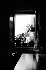 The rear window (-Aldievel-) Tags: siena italia italy film pellicola ilford400 ilford rollei35led window windows finestra luci lights ombre shadows monochrome blackwhite biancoenero blackandwhite acqua