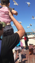 2016.10.10 賈小弟餵海鳥@Labrador  Beach-3 (amydon531) Tags: 澳洲 黃金海岸 gold coast australia trip travel vacation baby boys kids brothers justin jarvis family toddler cute feeding labrador beach seabirds
