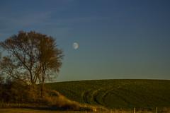CM_Leisen-_MG_8689-161111 (dan_pix) Tags: moonrise northdakota