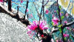 Let it bloom again (Bamboo Barnes - Artist.Com) Tags: digitalart vivid bamboobarnes photo painting light shadow pink green blue black japan osaka tree flower building sky