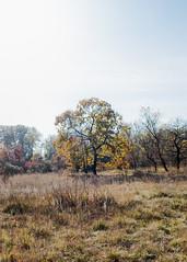 (Paul Bauer Photo) Tags: paul bauer landscape landschaft vienna wien lobau naturpark herbst fall nature tree austria sterreich fuji x pro 2 xpro