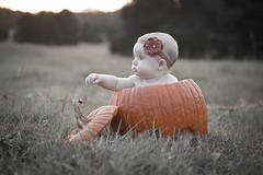 Our Little Pumpkin  (EXPLORED 11.04.16 #208) (Mike Bader) Tags: babyphotos babyportrait babies baby babyinpumpkin fallcolors fall autumn autumncolors grandbaby