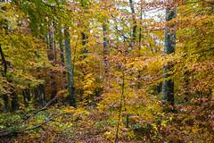 Eslovenia-2016-296 (Jos Manuel Garcs) Tags: knejanjiva cerknica eslovenia si