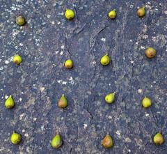Figurative (nicklucas2) Tags: fruit fig stone