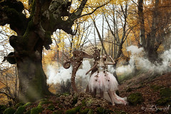 Fairy Harp (Elis's ) Tags: assoluto magia magic fairyharp arpa harp fairyland fairytale fairytales favola fiaba fantasy fantastic portrait ritratto ritrattistica portraiture body corpo tulle tut dress magicdress elisascascitelli elisphotography autumn autunno yellow giallo bosco wood forest foresta infinito infinite musica song play suonare ropes corde strings music canon5dmark3 2470mm albero tree 100iso light luce suono portfolio posa poetry poesia fineart art arte artistic conceptual concettuale ambient ambiente racconto nature natura tale woman donna teen ragazza girl fata pixie flowers