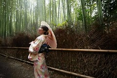 232011 (Yolanda Su) Tags:   maple  kimono