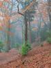 Beaumont Park 2 (RD400e) Tags: canon eos 5d mk3 24105mm f4l beaumont park huddersfield trees leaves fog mist