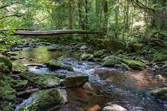 Wolfsteiner Ohe (since 1960) Tags: europa europe deutschland germany bayern bavaria bayerischerwald bavariaforest baum tree natur nature landschaft landscape nikond90 flus river