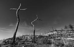 Cementerio de arboles. (Ramirez de Gea) Tags: blancoynegro blackwhite tokinaaf1224mmf4 catalunya