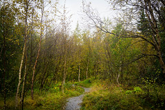 Into the woods (kzoop) Tags: iceland travel vacation europe lake myvatn nature hofdi tree trees forest woods hike hiking