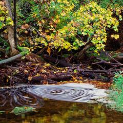 Swirl - Velvia 100 exp* (magnus.joensson) Tags: sverige sweden skne naturreservat rvarekulan hasselblad 500cm zeiss sonnar c 150mm fuji velvia 100 exp2007 e6 nofilter