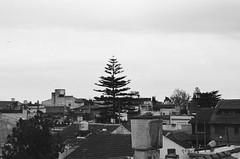 View from the roof, september 2016. (florencia tiembla) Tags: 35mm 35mmfilm filmphotography ishootfilm filmisnotdead kodaktrix400 nikonfm10 blackandwhite blackandwhitefilm