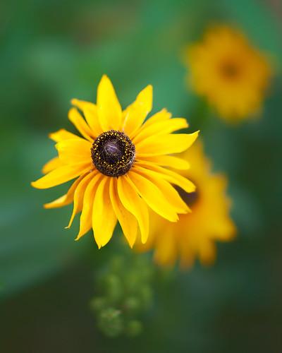 20140928_garden flowers_0086