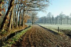 winter walk.......... (atsjebosma) Tags: winter frost walking path perspective trees cold koud wandelen bomen vorst sun atsjebosma coendersbos nuis groningen december 2016