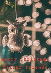 Merry Christmas (Tracey Rennie - catching up) Tags: holidays christmas owl bokeh 12800 iso christmastree ornament