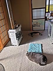 Guarding the Heater (sjrankin) Tags: 14december2016 edited animal cat tigger yuba yubari hokkaido japan heater upstairs sleep hdr