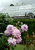 Christmas Day in the Christchurch Botanic Gardens (stephen trinder) Tags: stephentrinder stephentrinderphotography christchurch christchurchnewzealand christmasday nz newzealand aotearoa kiwi landscape roses