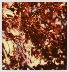 Rosary Tree (tobysx70) Tags: santa door new old red toby color tree film church leaves project mexico polaroid sx70 for beads cross prayer chapel 66 route trail tip cameras 600 crucifix type rosary rollers fe hancock nm slr680 rt rte impossible loretto the 061214 frankenroid impossibleproject polawalk tobyhancock impossaroid