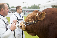 Kent_County_Show_2014_002