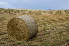 (Antonio_Trogu) Tags: italy field grass italia harvest straw mo hills erba crop campo hay balla bales bale colline paglia emiliaromagna balle fieno rotoballe rotoballa roccasantamaria antoniotrogu roccasmaria lafagiola