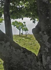 Jeux de Branches! (luka116) Tags: berg montagne schweiz switzerland suisse swiss jura svizzera paysage moutain neuchatel montagnes 2014 creuxduvan paturage