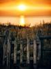 Z (dubdream) Tags: ocean door sunset sea sky seascape water fence germany landscape lumix balticsea panasonic explore steilküste schleswigholstein landcape heiligenhafen colorimage wetreflection explored dmcgx7
