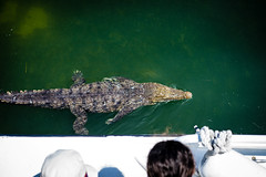 Cancun2014-2760 (HarmanFriday) Tags: ocean sea summer vacation green water mexico bay boat underwater snorkel tank outdoor cove dive salt diving lagoon adventure oxygen crocodile cancun caribbean
