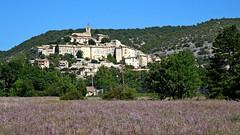 Provenza - Banon 1 (antoniobusso) Tags: france nature landscape miel provence lavande francia paesaggi provenza lavanda lavandin