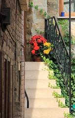 (:Linda:) Tags: germany town backyard ivy thuringia step flowerpot railing hildburghausen