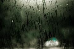 Rain (alicehccn) Tags: street tree green window car rain blurry bokeh splash