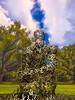 Overflow by Juame Plensa (igzabeher) Tags: louisiana unitedstates neworleans overflow wideanglephotography juameplensa sydneyandwaldabesthoffsculpturegarden neworleansmuseumofmodernart