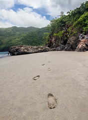 ObviousPhoto-6.jpg (Noth1ng 2 Off3r) Tags: footprints indentations beach sand water dominicanrepublic steps mountains