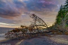 Arbre sur la plage (natola) Tags: sunset lake canada nature landscape lac paisaje québec paysage arbre plage saguenay coucherdesoleil crepúsculo sepaq lacstjean