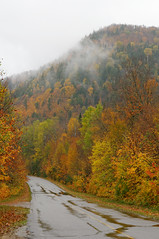 Aprs la pluie (Chris@Issy) Tags: voyage road park travel autumn vacation canada color colour tree fall nature automne vacances route national qubec arbre parc couleur monttremblant chrisissy atempsperdu
