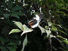 2008-10-18 Tropical Wings _76 (Velda Tiger Lily Varney) Tags: camera pentax compact cameraequipment pentaxoptiol30 brandmain